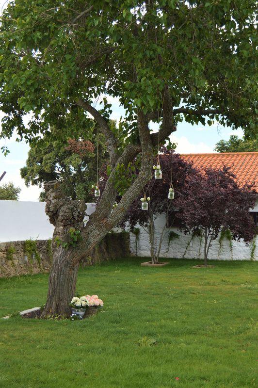 Árboles en el jardín