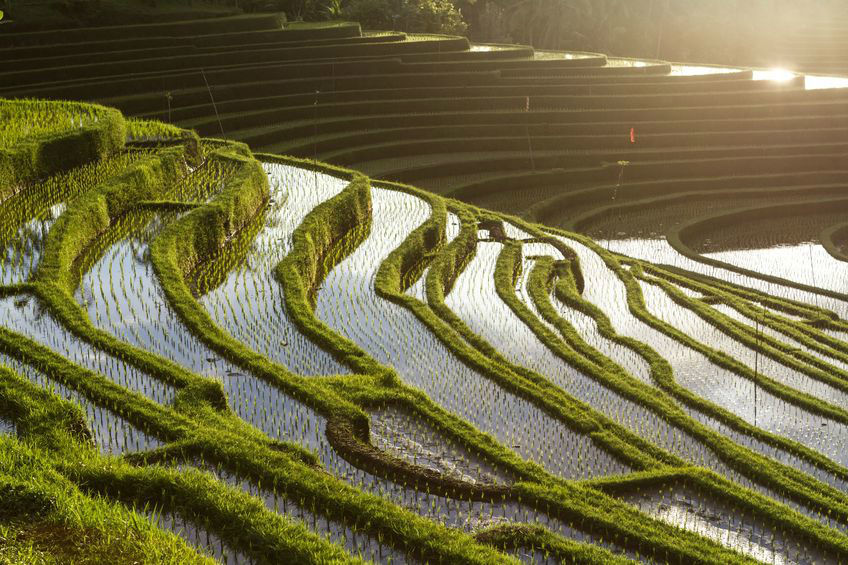 Terrazas de arroz, Jatiluwih - Indonesia en tus manos.