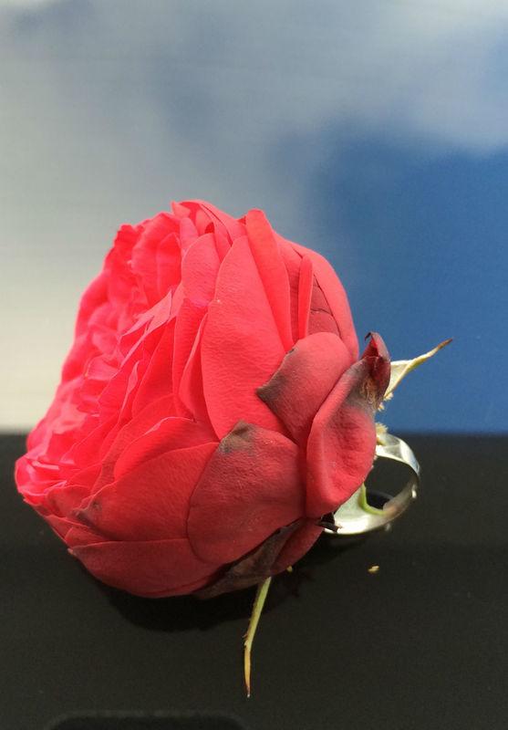 Bola. Foto: Flores a la Carte