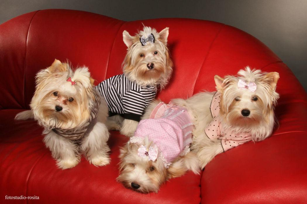 Festliche Hundemode Foto: Hunde Boutique 24