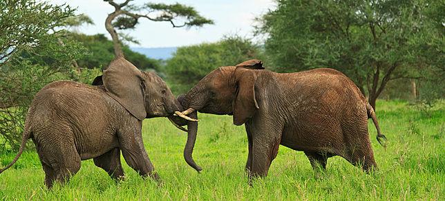 Beispiel: Safaris, Foto: Evaneos.
