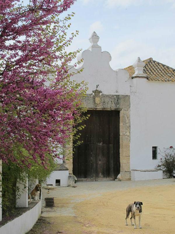 Hacienda Faín Viejo.