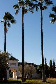 La Huerta y sus palmeras