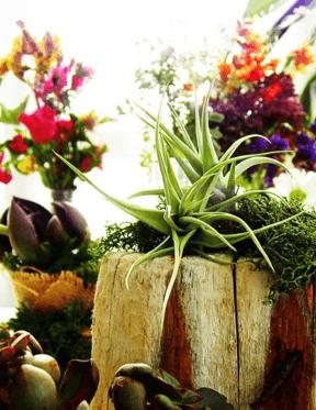 Labotanica Diseño Vegetal