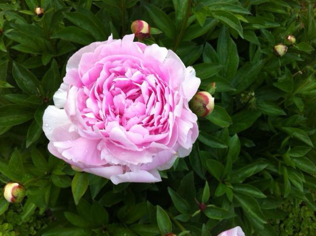 Beispiel: Blumen die bezaubern, Foto: Blumenhaus Mäglin.