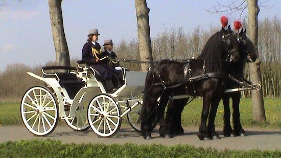 Stalhouderij Wijnand Hazeleger
