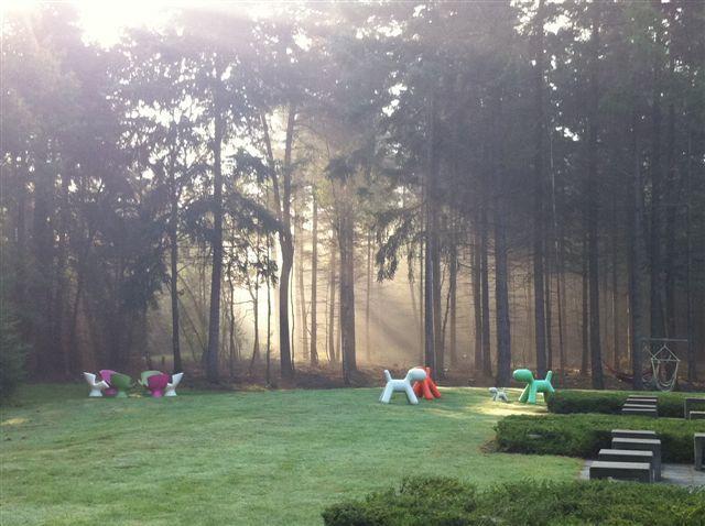 Hoe de zonnestralen het bos verlichten, sprookjesachtig mooi.