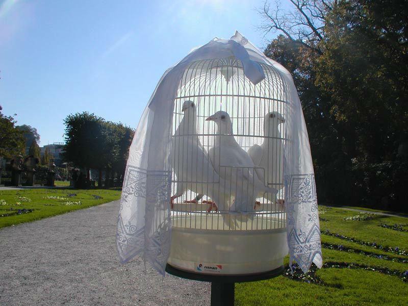 Beispiel: Weiße Tauben im Käfig, Foto: Hochzeitstauben Fleckner.