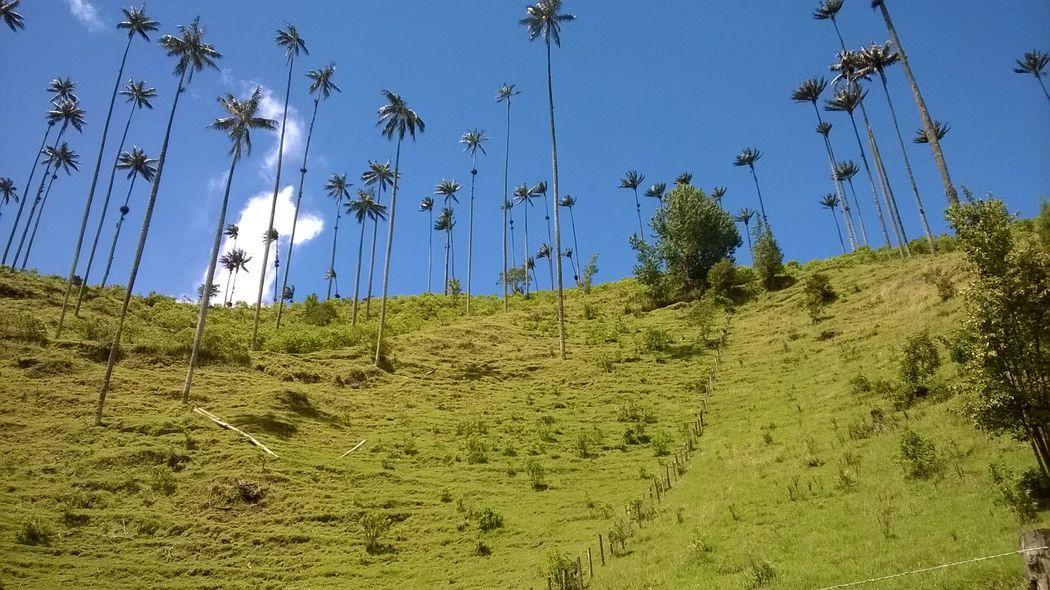 Valle del Cocora - Salento Colombia