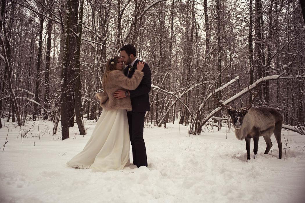 Scandinavian deer winter. Весь PHOTO FILM в альбоме: https://vk.com/album-94700104_228741751