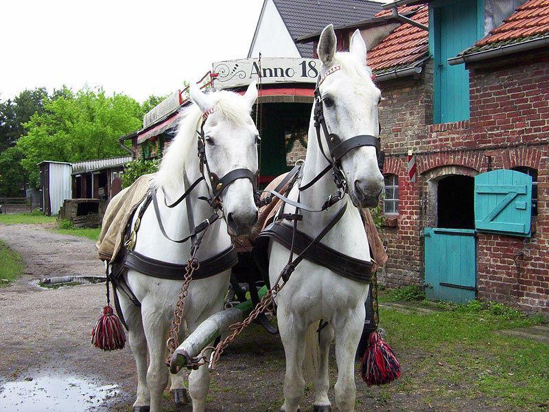 Beispiel: Wunderschöne Pferde ziehen Ihre Kutsche am großen Tag, Foto: Berliner Hochzeitskutschen.