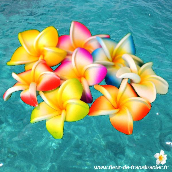 Panachage de couleur de fleurs de frangipanier: blanc, turquoise, fushia, violet, vert, orange, jaune, rouge
