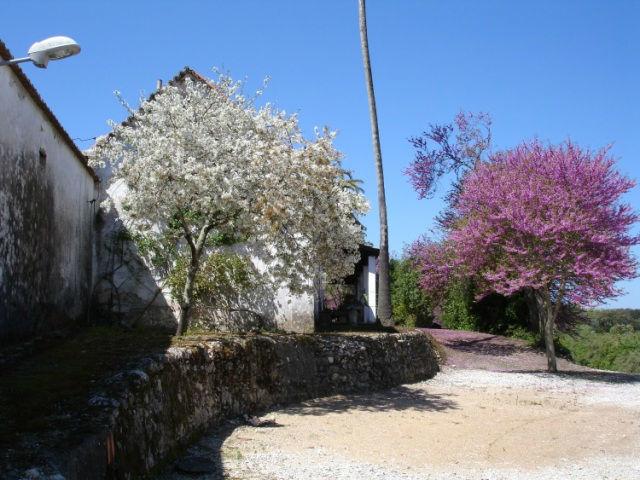 Foto: Quinta de São Martinho