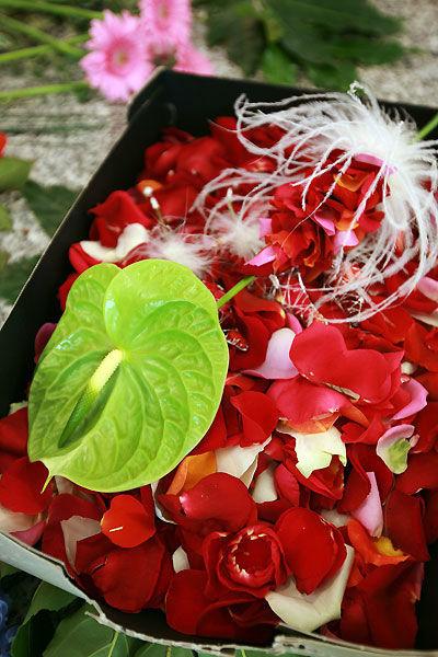 Beispiel: Rosenblätter, Foto: Durchgeplant.