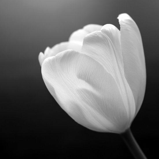 Beispiel: Blumen, Foto: La Fleur.