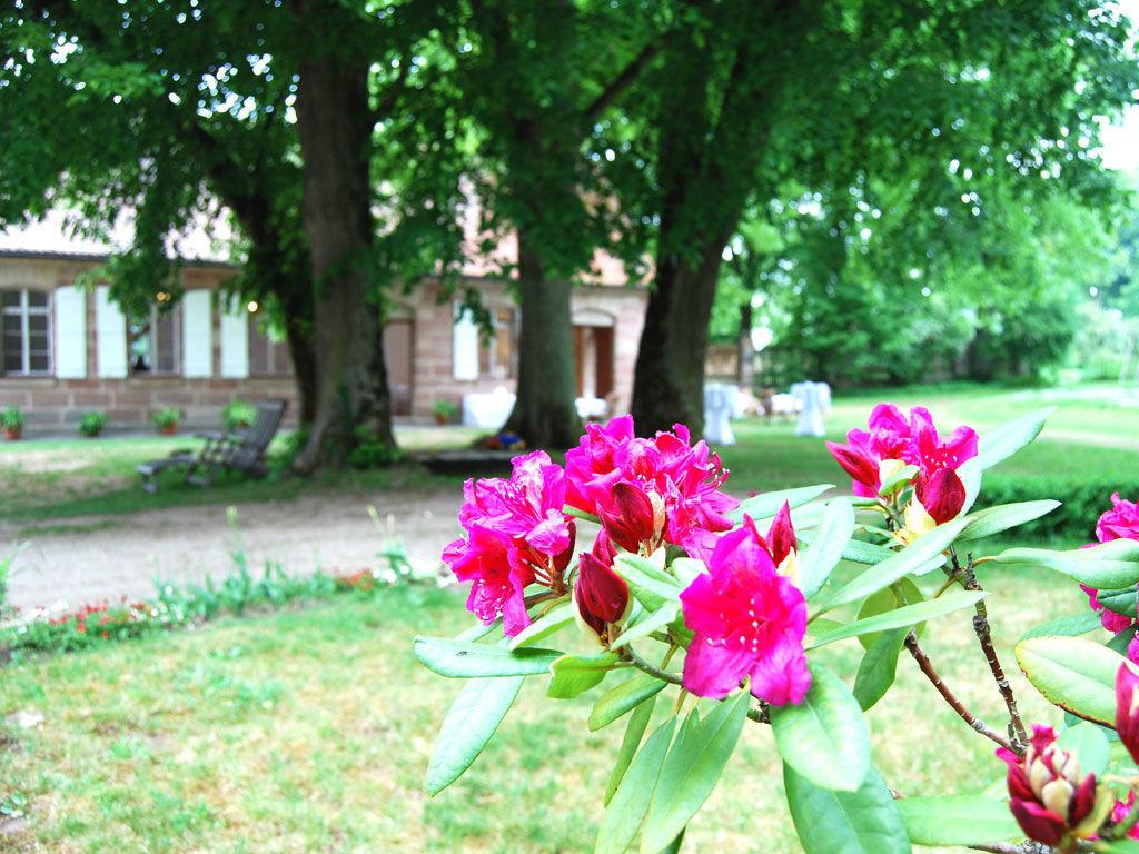 Beispiel: Schlossgarten - Flora, Foto:  GenussRäume der SchulerGruppe - Schloss Dürrenmungenau.