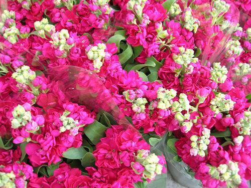 Beispiel: Blumensortiment, Foto: Beko Blumen.