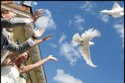 Witte Vleugels van Vreugde en Verdriet