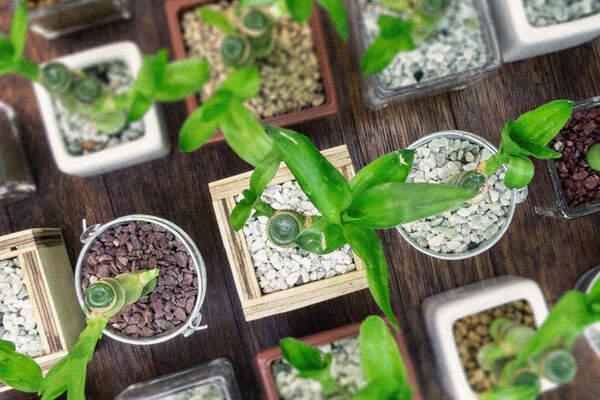 Vivero real bonsai
