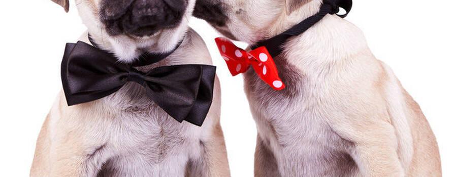 Fliege für Hunde Foto: Hunde Boutique 24