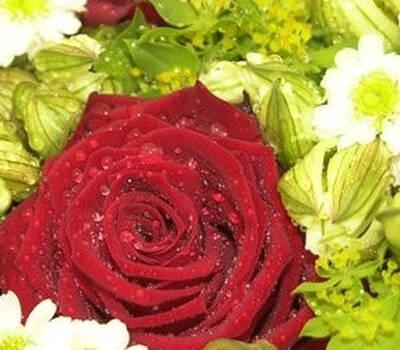 Beispiel: Einzigartige Farbkombinationen, Foto: Blumen Stieber.