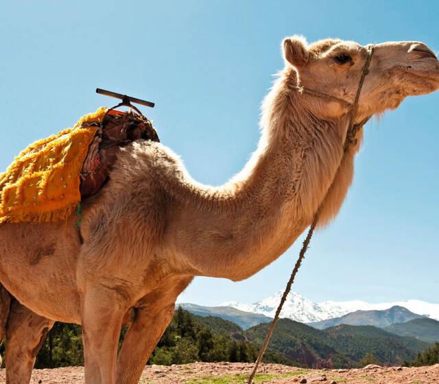 Podróż poślubna z TUI