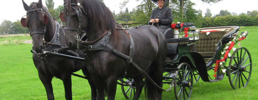 Beispiel: Wunderschöne Pferde, Foto: Hochzeitskutschen-Mieten.de.
