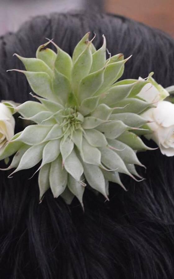Expresión Floral Opiniones Fotos Y Teléfono