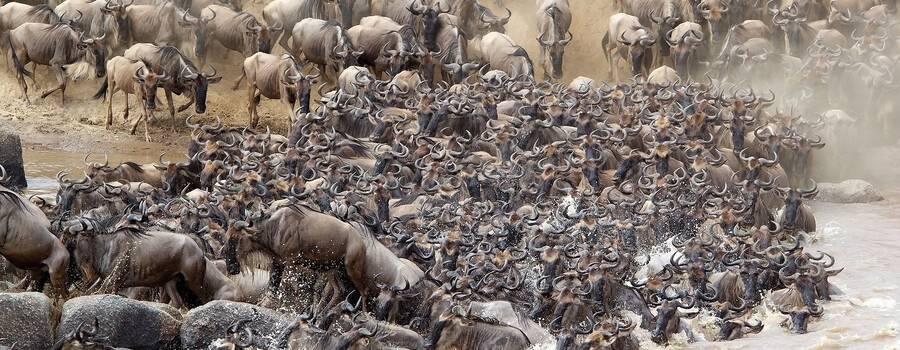 Masikio Safaris
