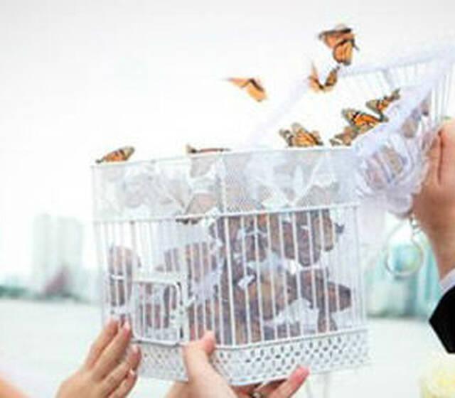 Liberación de mariposas vivas en eventos