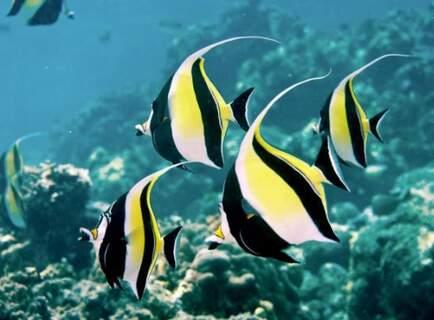 Sortie Bateau & Snorkeling | Bali