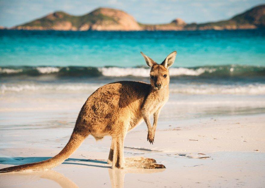 Voyage de noces extra : l'Australie, entre rêve, aventure et immensité, découvrez notre circuit recommandé