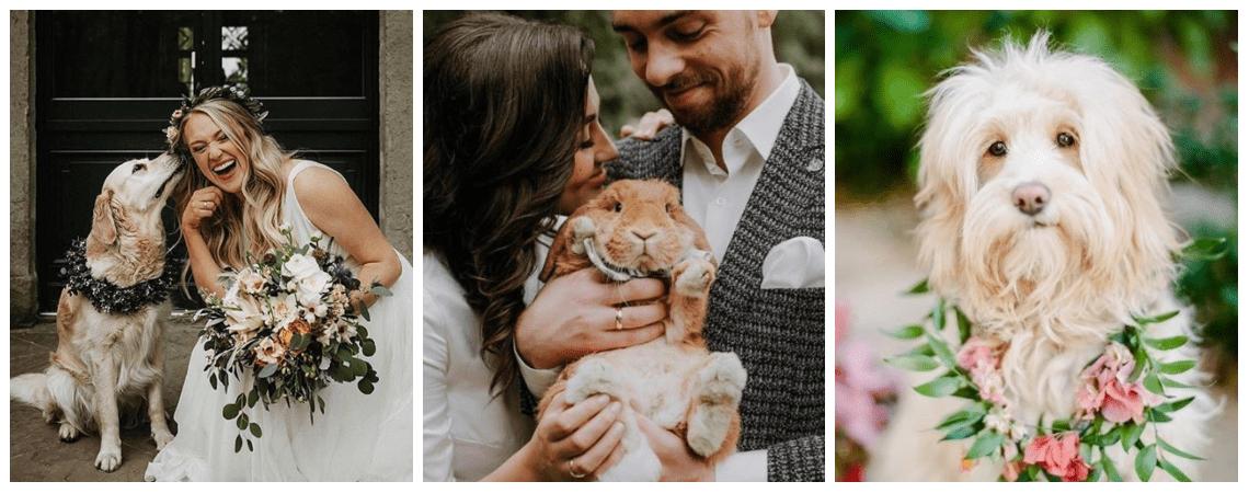 Wie Sie Ihr Haustier in Ihre Hochzeit integrieren können!