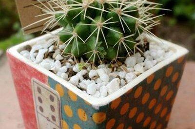 ¿Un cactus como recordatorio de boda? ¡Sí y es perfecto!