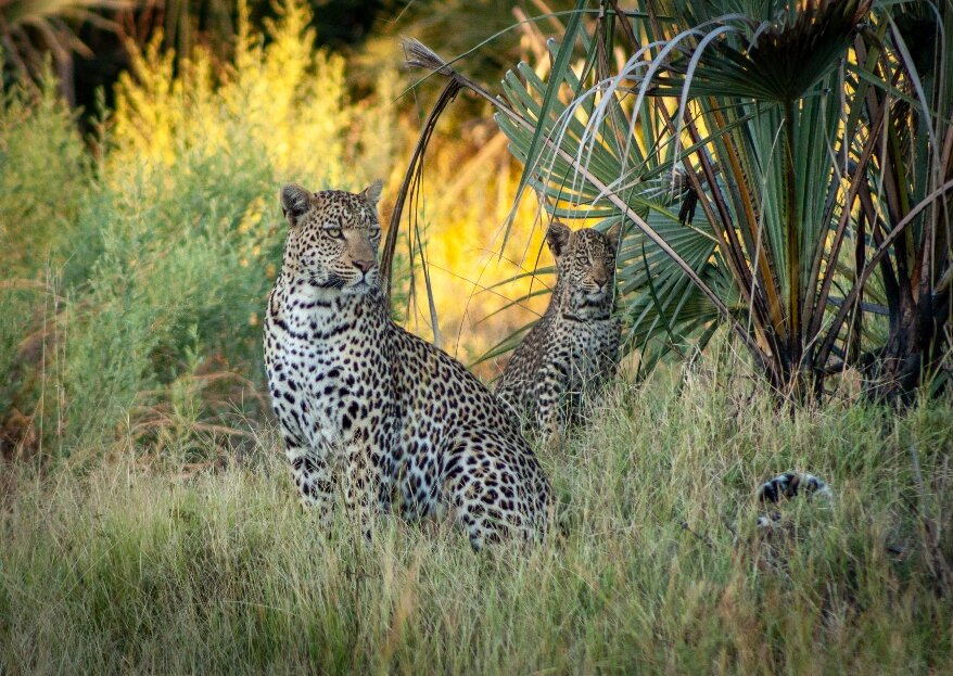 "La ""vostra"" Africa: una luna di miele firmata Botswana Holidays"