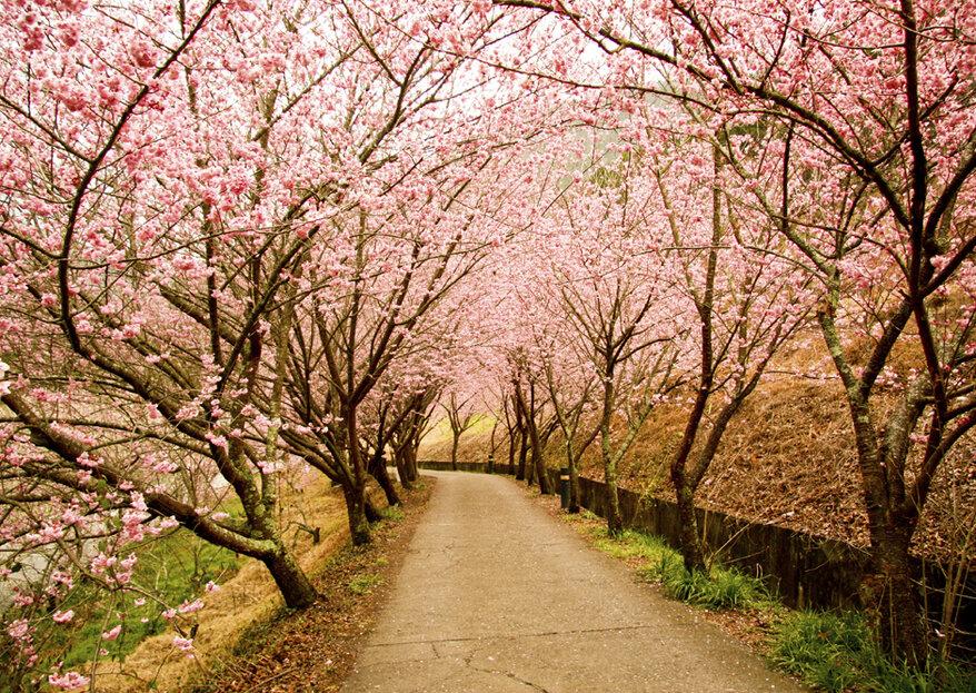 Conociendo Japón a través de Tokio y Kioto: una luna de miel con sabor oriental gracias a Nautalia