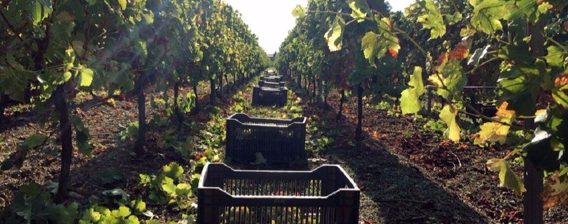 Bordeaux Sélect : des cuvées personnelles qui s'accorderont parfaitement avec votre repas de mariage