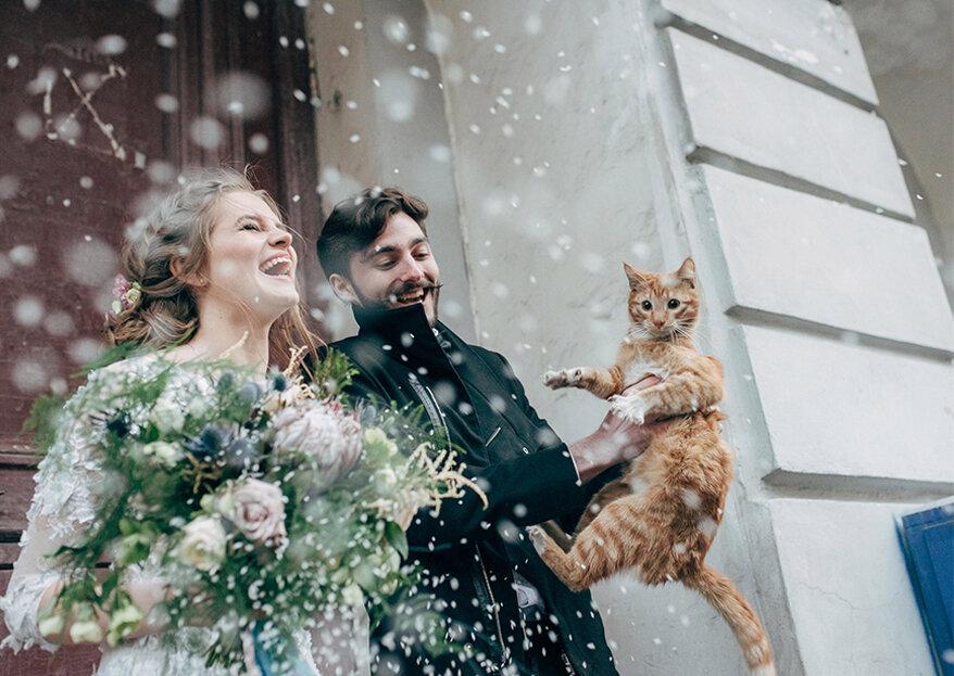 Um gato no seu casamento: vale a pena levar o seu animal de estimação consigo?