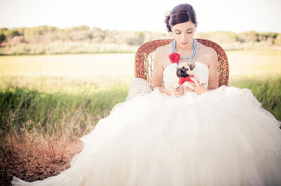 Perfectly groomed pets at your wedding