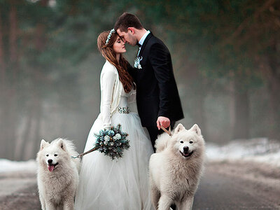 A Dog's Eye-View of a Beautiful Winter Wedding