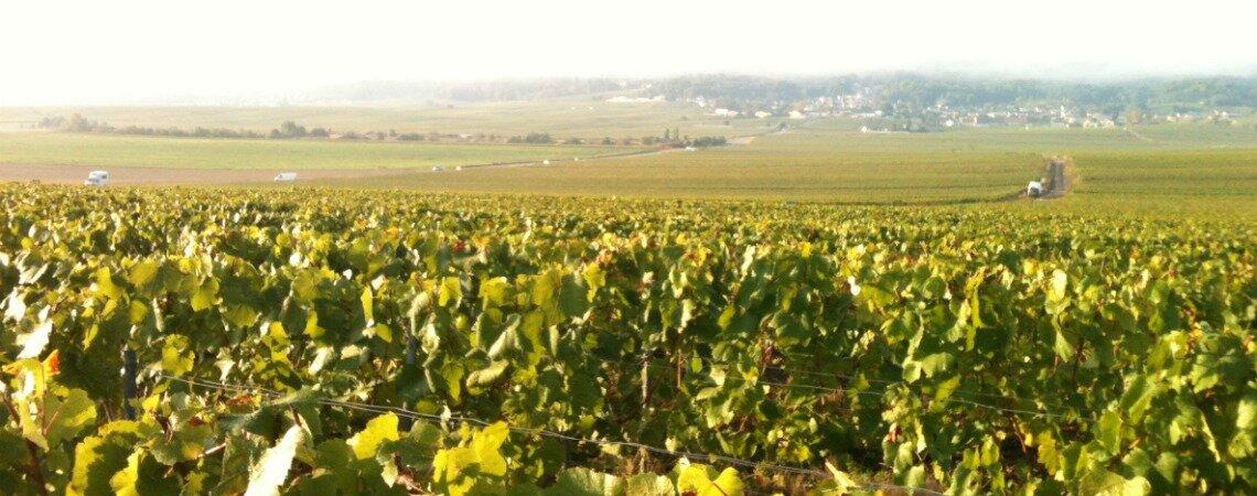 Savoureux mélange de tradition et de modernité, dégustez le champagne Martial-Couvreur !