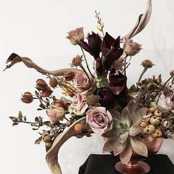 Credits: Allium by Olympia