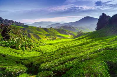 Malasia: El paraíso destinado para tu luna de miel