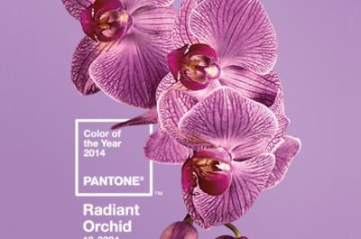 Orquídea Radiante: A cor do ano para casamentos de 2014