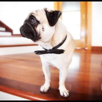 """<a href=""""https://www.zankyou.it/f/luca-fabbian-wedding-photography-49348"""">Clicca QUI per maggiori informazioni sul fotografo</a>"""