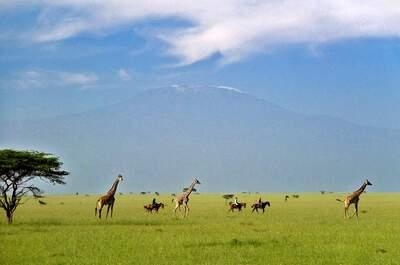 Vive una luna de miel en Kenia al más puro estilo 'Memorias de África': ¡safaris privados! ¡Lodges coloniales!