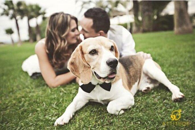Sesión de fotos pre boda con perros - Foto Fran
