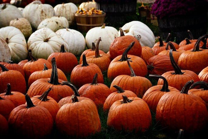Halloween Kürbis orange und weiss