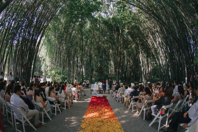 Luisa Caballero Detalle & Curaduría de Experiencias