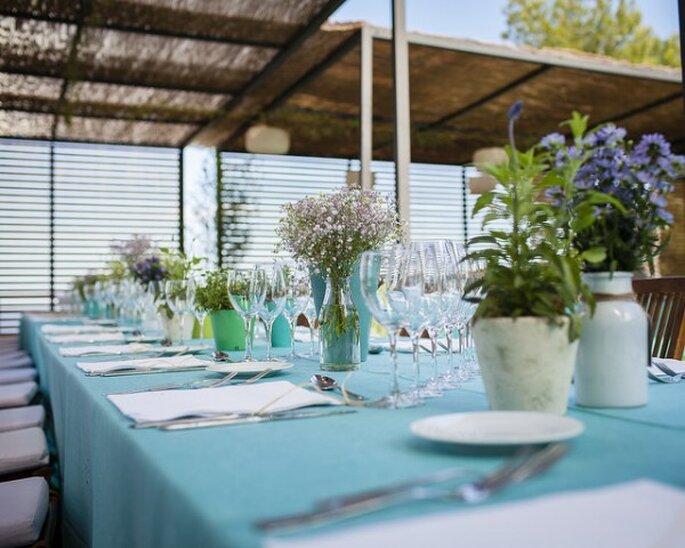 Blaue Tischwäsche, Instantanea & Tomaprimera